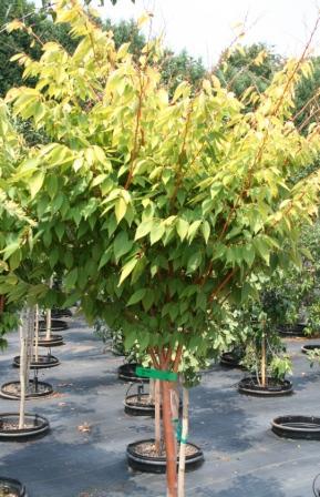 Hawksridge Farms Plant Information
